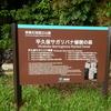 南ぬ島 石垣島旅行記 その5 さがる花と、GARA
