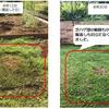 芝刈時にハゲてしまう、芝が凸な場所の対処方⇒経過観測(18日後)
