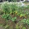 やんちゃファーマー。冬越しの野菜たち。