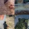(海外の反応) 「裸にネズミの群れまで」…中国産キムチ製造過程「衝撃」[映像]