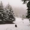 【ロックダウンのドイツ】冬の森で散歩