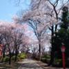 村富神社のさくら情報  3月25日