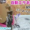【YouTube 投稿】ハムスター🐹ダンボールで自動エサあげ水車作ってみた♪ヒマワリの嵐…#37