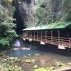 秋芳洞(あきよしどう)|冒険心をくすぐる鍾乳洞探索
