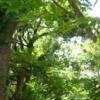 植物と私: 紅葉雑記