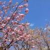 春の花の移ろい
