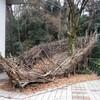 板橋区立美術館の「発信//板橋//2013 ギャップ・ダイナミックス」を見る