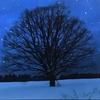 冬の俳句タイトル戦『冬麗戦』が生んだ物語性の話