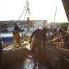 【今日の一枚】早朝の漁港