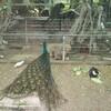 【0円動物園】ミニミニ動物園に行ってきた