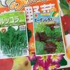 男の家庭菜園シリーズ2