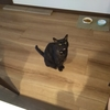 うちの猫は普通でした