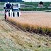 新米収穫作業最終日 ちょっと寂しい