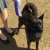 甲斐犬サンは三席獲得!の巻。:.゚ヽ(´∀`。)ノ゚.:。 ゜