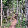 """トレイルランニングのマイ作法 vol.1 """"How can we enjoy trail running with a safe and enjoyable time as a beginner?-vol.1-"""""""
