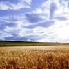 クレヨンの黄を折る…秋の雲