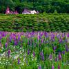 初夏の滝上町の風景たち~錦仙峡・香りの里ハーブガーデン・朝霧の牧草地~