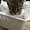 kitty phobia