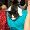 【先住猫と新入り猫】保護猫多頭飼い 四猫になって40日が経過しました。