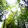 森林浴とフィトンチッド、マインドフルネスでアトピー改善。