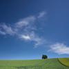 二色麦の丘