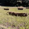 今日の農作業_20181125