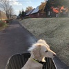 エンゼルフォレスト那須白河・2020年11月・その2・マウンテンバイクと犬乗せ自転車・ワンちゃん預かりルームの様子も