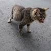 第4話  喫茶店の猫の飼い主さんと出会う