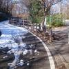【多摩湖積雪状況 H30.2.8】多摩湖の凍結回避ルートをお教えします!