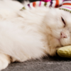 睡眠は上位レベルで大事な要素