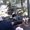 新歓イベント@上野動物園