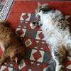 我が家の愛猫の寝相ギャラリー