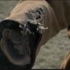 ウォーキングデッドシーズン6 vol 8   第15話 巡る因果 感想 ネタばれ