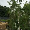 外構に植えるシンボルツリーは人気ランキング1位のあれにした