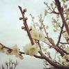 立春。春の始まりの日に「やることリスト」を考えてみました