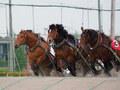 競馬初心者でも楽しめる 帯広競馬場のばんえい競馬