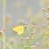 花、蝶、野鳥たち   ~秋のひとコマ~