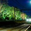 元山駅~くぬぎ山駅間の桜並木のライトアップ  その1@千葉県松戸市・鎌ヶ谷市