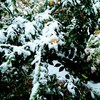 くさ色の思想を抱きて冬の猫 寺井谷子