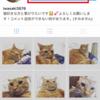Instagram 非公開のユーザーの写真を見るための方法