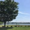 彩湖道満グリーンパークで1人デイキャンプ、3回目。と5月のバラ開花後のお世話について。