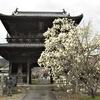 8番札所の熊谷寺は蜂須賀桜の名所