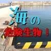 山陰【鳥取の海の危険生物】まとめ