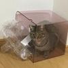 猫の抗議、プラゴミ編