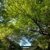 新緑っぷりがすごかった日向大神宮