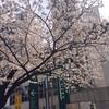 桜の木と自身の成長