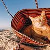 GoPro(ゴープロ)で撮った猫の写真がすごくいいぞっ!#goprocat