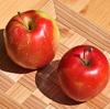 ことしの実りのシーズン、わが家の収穫も無事かたづいて…〝柿の木に林檎〟の事件もあって!?