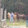 馬の交尾を始めて見ました(動画:閲覧注意)(31鞍目)