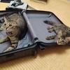 旅行中、猫はどうする?~ペットシッターさんに来てもらって大正解でした